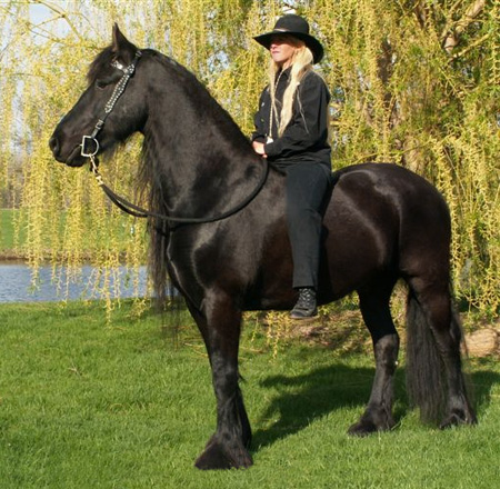 ~Horses~ Friesian - Vee for web